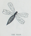 The Tribune Primer - The Wasp.png