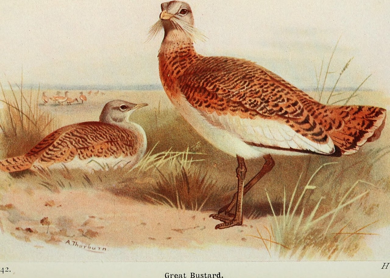 The birds of the British Isles and their eggs (1920) (14562998110).jpg