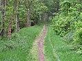 The path through Beech Hill Wood, Near Rufford Park - geograph.org.uk - 34714.jpg