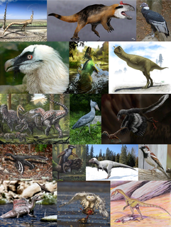 Theropoda group of dinosaurs