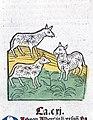 Three sheep, woodcut, 1547 Wellcome L0029220.jpg