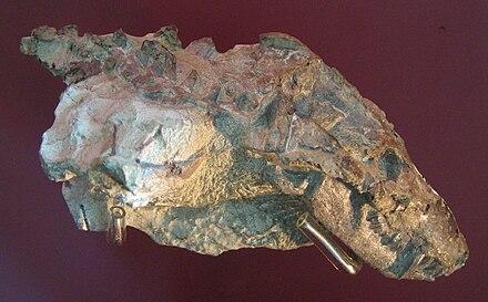 Nanictosaurus