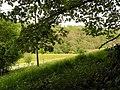 Through the leaves - geograph.org.uk - 439896.jpg