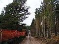 Timber Stacks Beside Wade's Road - geograph.org.uk - 1035190.jpg