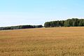 Toguchinsky District, Novosibirsk Oblast, Russia - panoramio (5).jpg
