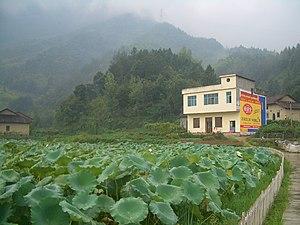 Jiugong Mountains - The Jiugong mountains rising above a lotus pond.