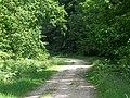 Track, Godshill Inclosure - geograph.org.uk - 1334091.jpg