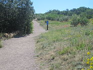 Trail at Rock Park, Castle Rock, CO IMG 5207