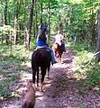 Trail ride pic web (5910378286).jpg