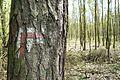 Trails, Dziewicza Gora (3).JPG