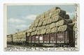 Train Load of Cotton for Export, South (NYPL b12647398-63069).tiff
