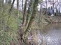 Trampelpfad (2008-03) - panoramio.jpg