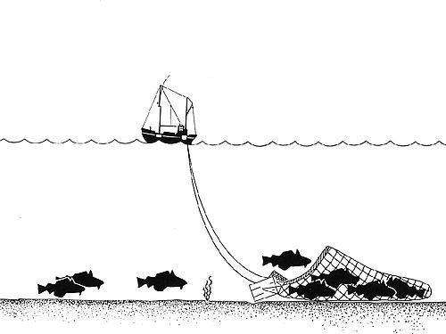 500px-Trawling_Drawing.jpg