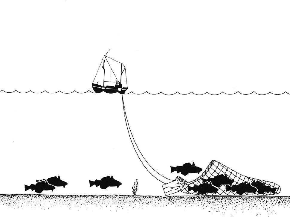 Trawling Drawing