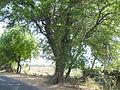 Tree hollow (5).JPG