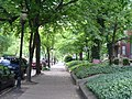 Tree lined 4th Street in Old Louisville.jpg
