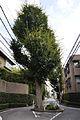 Tree on road - panoramio.jpg