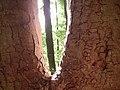 Trees - geograph.org.uk - 176279.jpg
