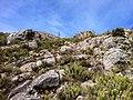 Trilha Pico da Bandeira - panoramio (20).jpg