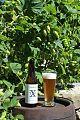 Txg-golden ale-Txorierri Garagardoak.jpg