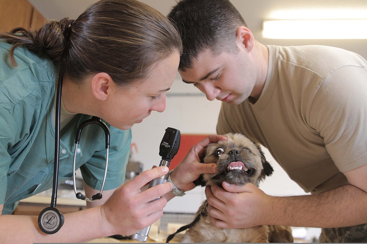 Image Result For Can A Veterinarian