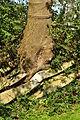 Ufenau 2011-07-25 18-01-56.JPG