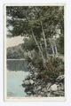 Under the Birches, Alton Bay, Lake Winnipesaukee, N. H (NYPL b12647398-68953).tiff