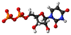 Uridine diphosphate anion 3D ball.png