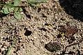 Včely samotářky (01).jpg