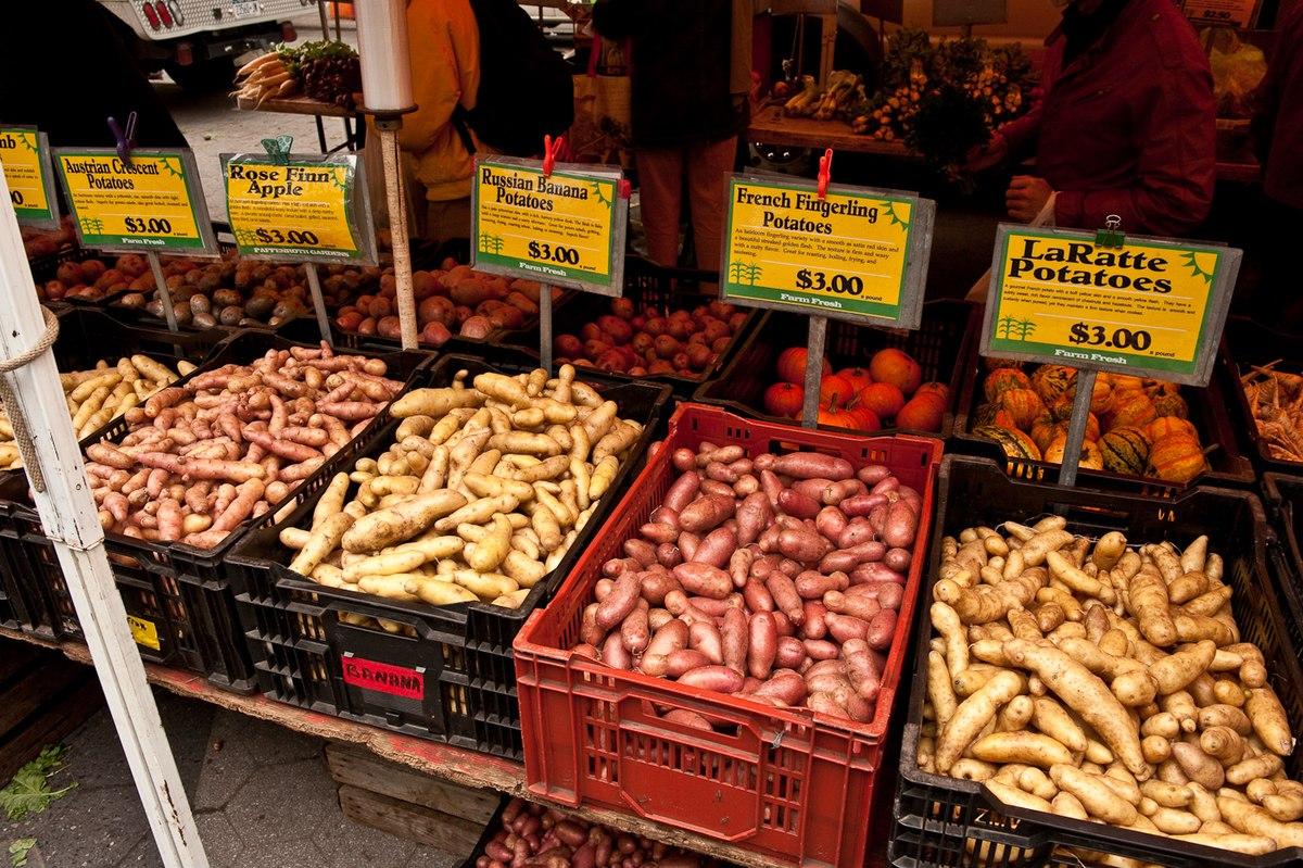Vari t de pommes de terre wikip dia - Variete de pomme de terre ancienne ...