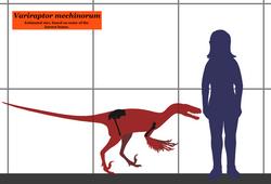 Variraptor SIZE.png