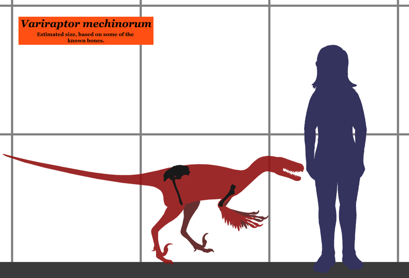 Ficheiro:Variraptor SIZE.png