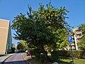 Varkausring Pirna (30670056578).jpg