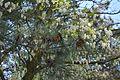 Velyka Oleksandrivka Nedohirskiy Forest 10 (YDS 0975).jpg