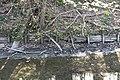 Vidange lac des Minimes avril 2010 - 013.JPG