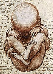 View of a fetus in the womb. Drawing by Leonardo da Vinci.