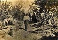 Vignes sur échalas vers 1880 à Port-Sainte-Foy.jpg