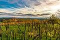 Vineyard sunset in Slovenia (37822244005).jpg