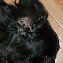 Pevně těsná černá kočička