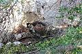 WWII spotlight on the Rock (1).JPG