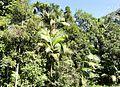 Wald (31490145036).jpg