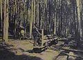 Waldeisenbahn Sihlwald.jpg