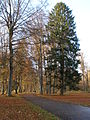 Walk thro´ the Woods II, 7-Tisch Wald - panoramio.jpg