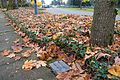 Walnut Grove Plaque.jpg