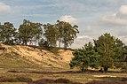 Wandelen over de Planken Wambuis vanuit Mossel 019.jpg