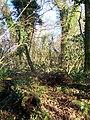 Wayford Wood - geograph.org.uk - 1097015.jpg