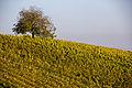Weininsel 2014 21.jpg