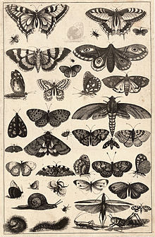 Wenceslas Hollar - Forty-one insects.jpg