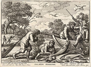 Atlantic salmon - Seine fishing for salmon – Wenzel Hollar, 1607–1677