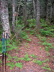 West Sleeper NH summit.jpg
